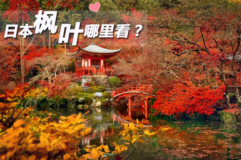 日本枫叶哪里看