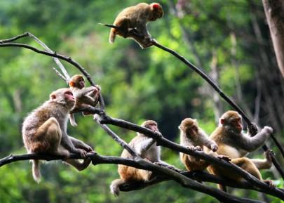 临安太湖源野猴节、琴湖飞瀑、浙西大龙湾2日