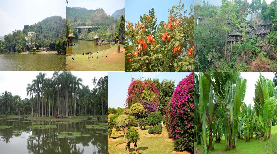 西双版纳热带植物园傣族园纯玩1日游