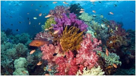 壁纸 海底 海底世界 海洋馆 水族馆 桌面 454_257