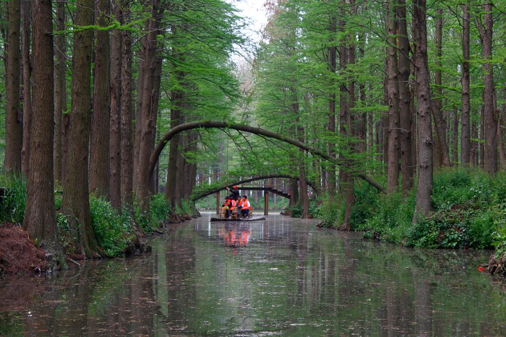 已输入0 /500字水杉树倒影在水系里,一幅墨绿画的感觉,坐满游人的
