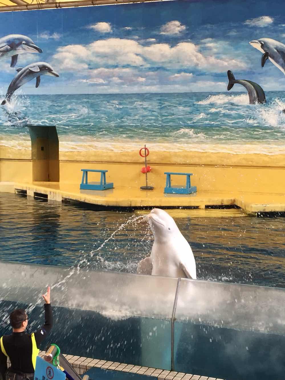 广州海洋馆 广州海洋馆和动物园套票 成人 广州海洋馆在动物园里面,图片