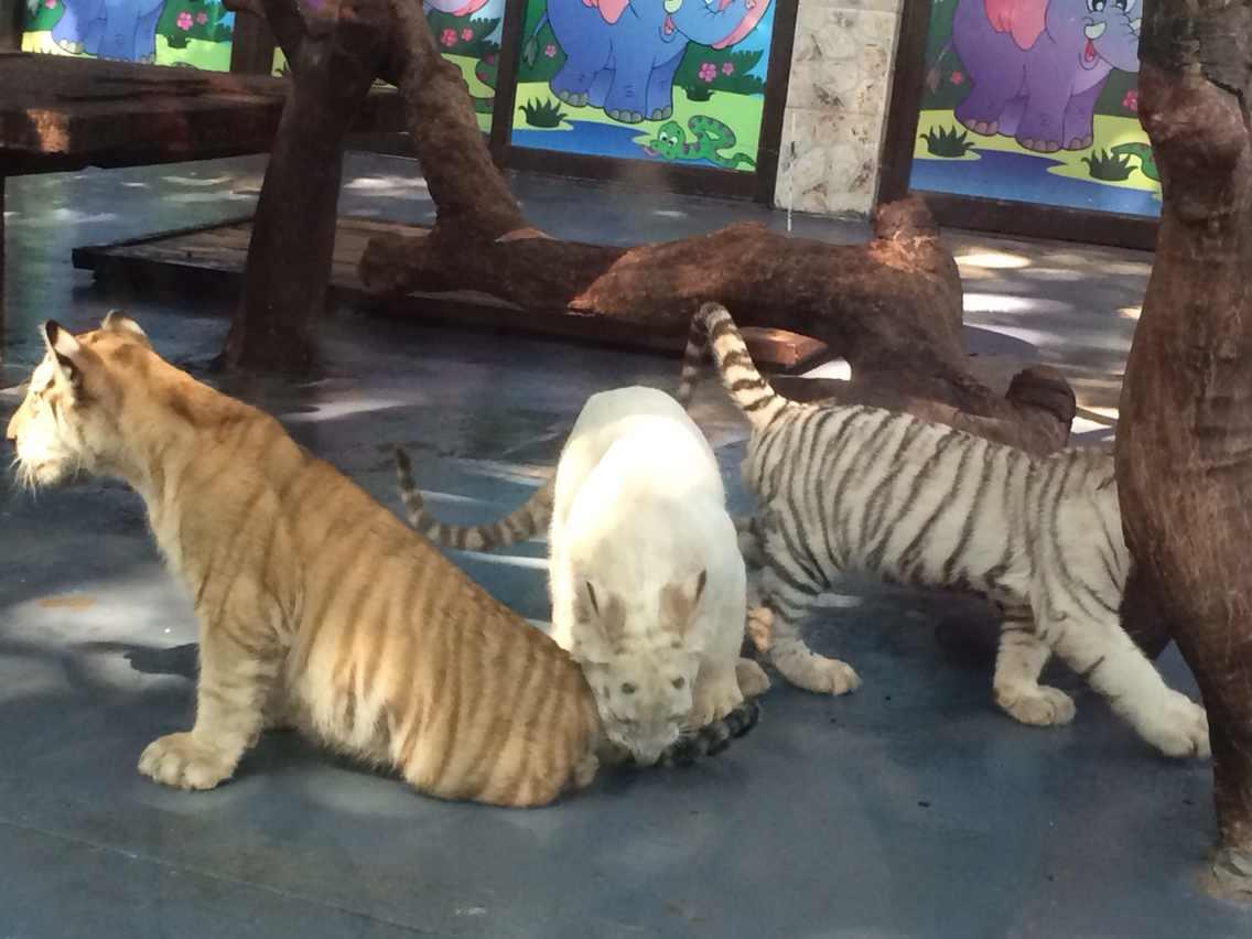 广州长隆野生动物园住宿攻略【相关词_ 广州长隆野生动物园】