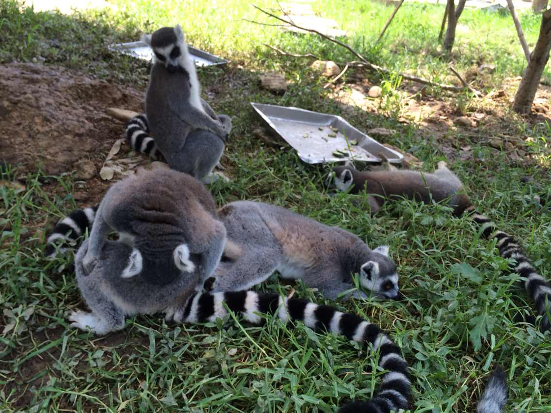 杭州野生动物园地图图片_杭州野生动物世界