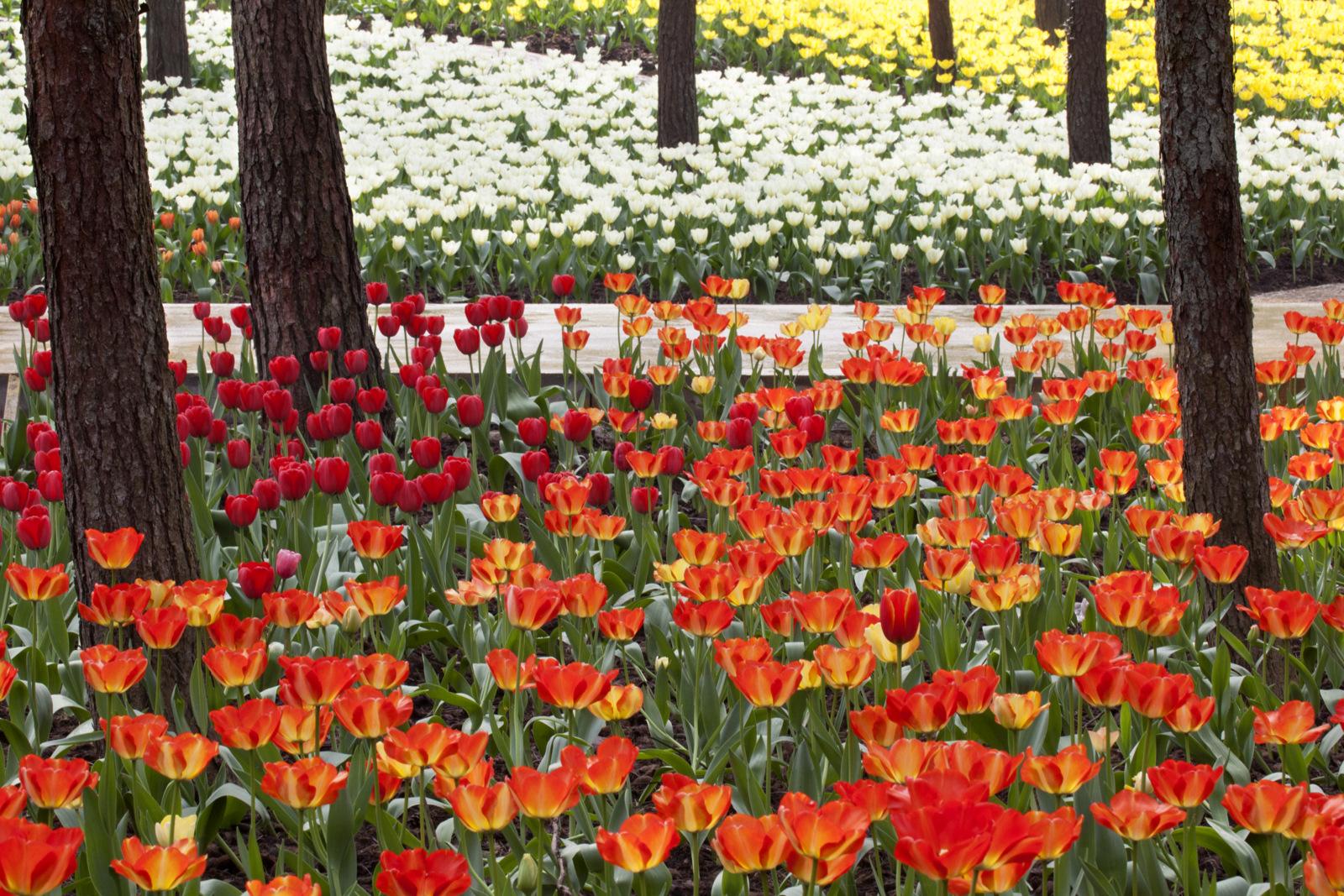 重庆大木花谷景区大木林下花园6月门票特卖团购 特价特卖 旅游打折