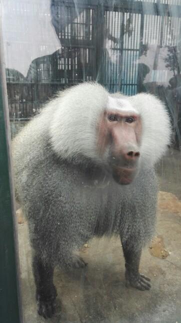 无锡动物园·太湖欢乐园   无锡动物园·太湖欢乐园-成人票