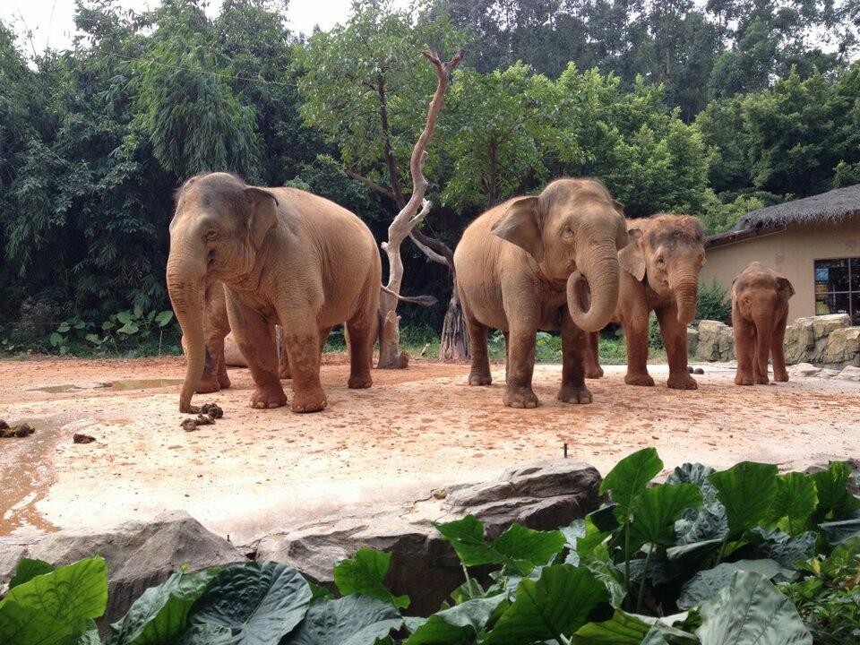 福州到广州长隆野生动物园怎么去,建议玩几天好