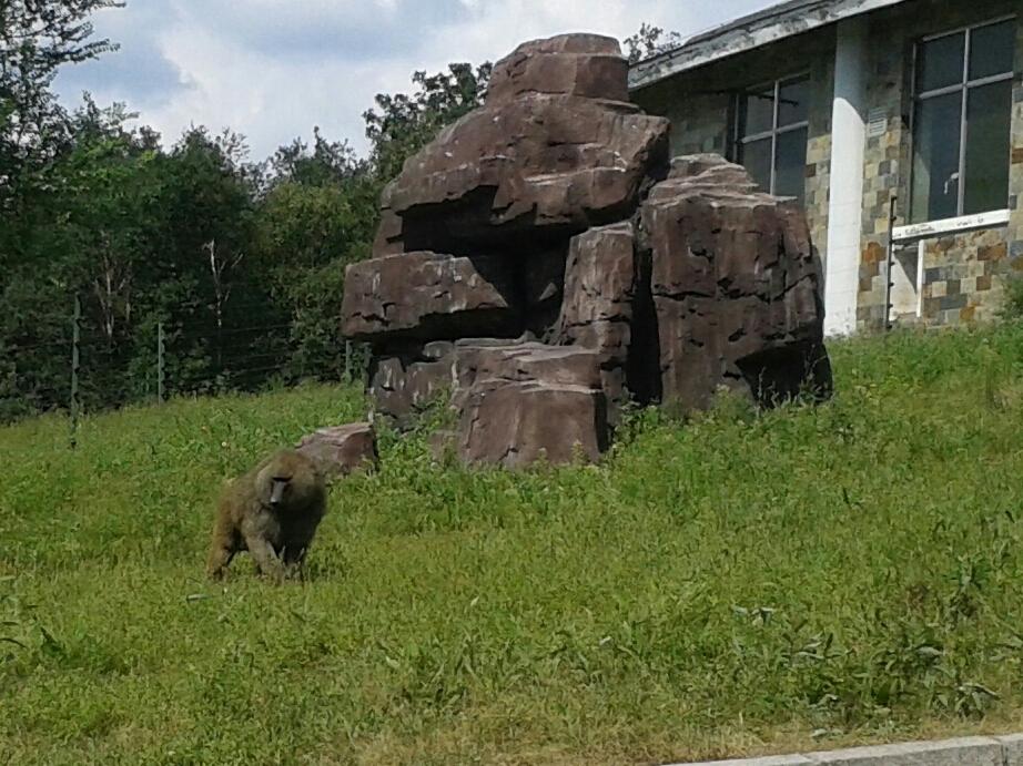 北方森林动物园门票_北方森林动物园野猪_北方森林动物园野猪分享展示