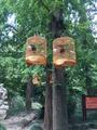 【世界那么大,我先去崇明】住1晚新崇大酒店+东平国家森林公园+酒店双份早餐+免费WIFI+免费停车