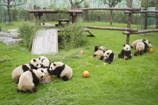 上海动物园游览图_上海上海野生动物园图片大全_景点图片/摄影照片【驴妈妈攻略】