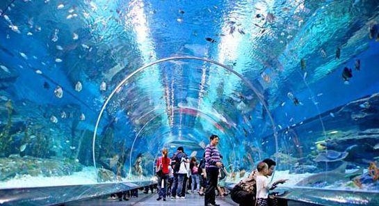 长风公园水族馆门票_上海海洋水族馆和长风海底世界哪个比较好玩 都有些什么?-
