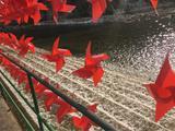 百里峡、东湖港、玻璃栈道巴士2日跟团游( 纯玩团、无购物、游览时间充足!  景区有山有水,风景如诗如画! )