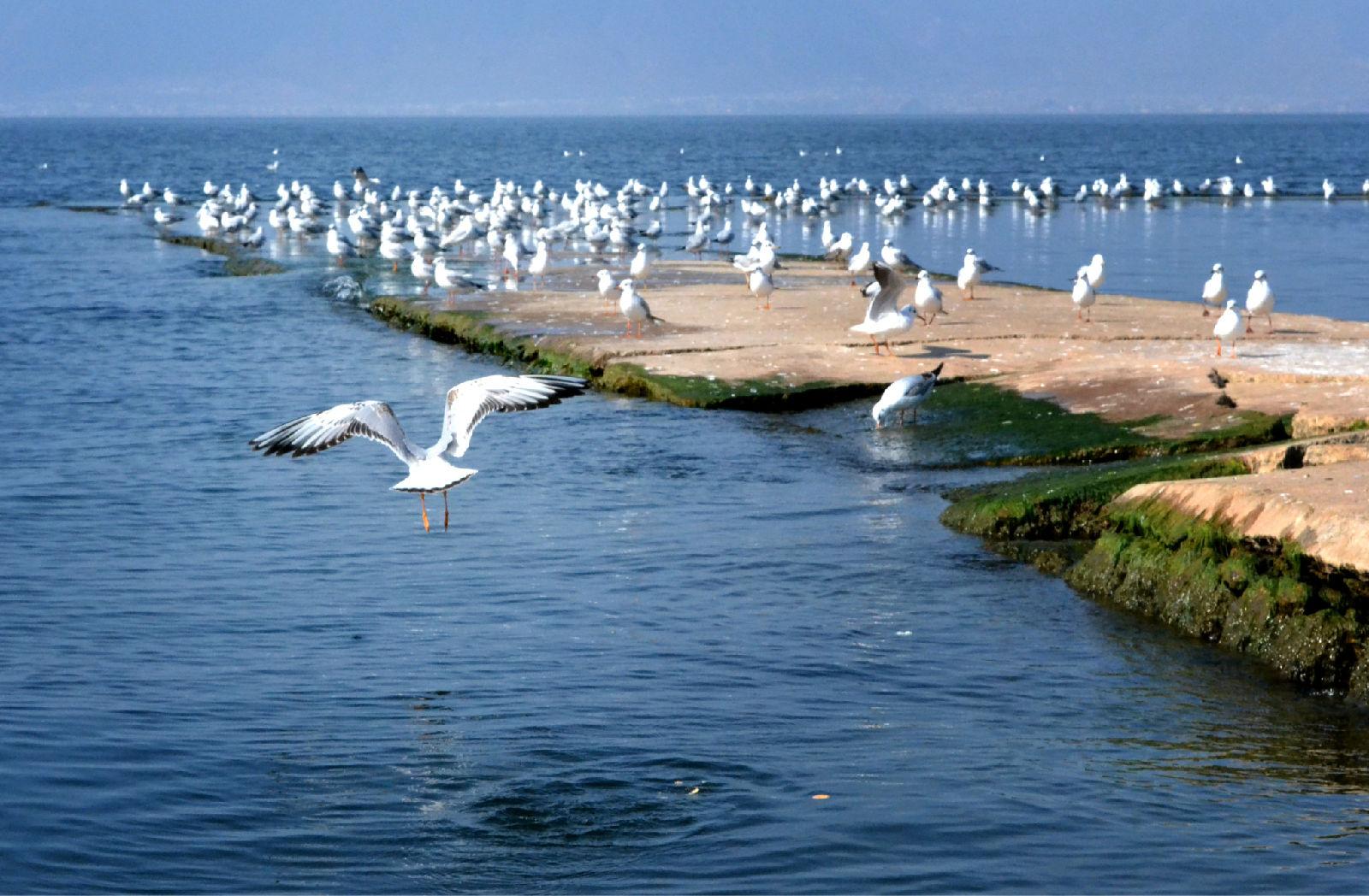 大理洱海海景房哪个比较好