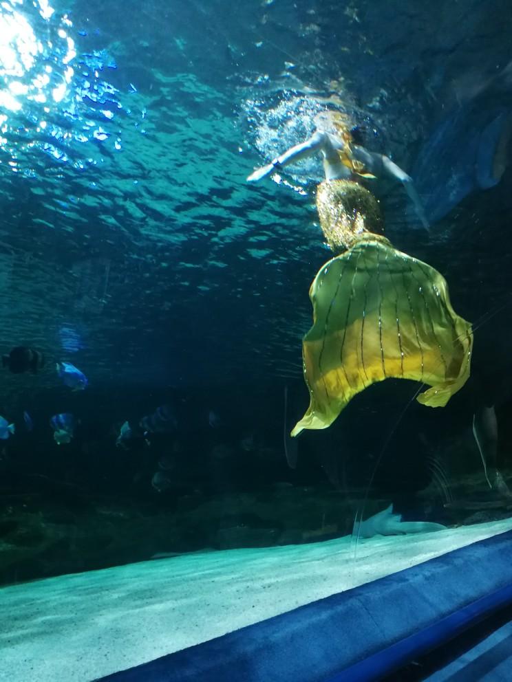 北京工體富國海底世界_富國工體海底世界_工體富國海底世界怎么樣