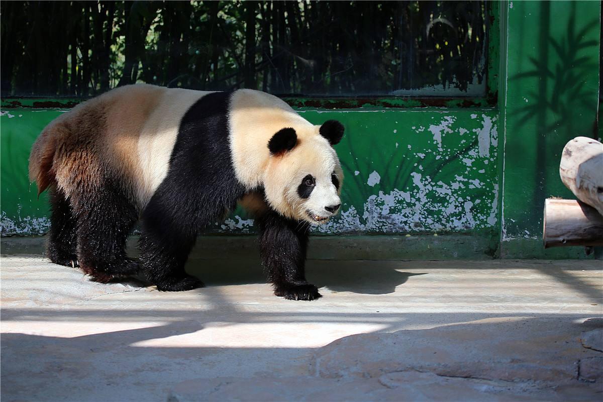 杭州野生动物园1日巴士跟团游(疯狂动物城)_宁波到跟
