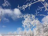 哈尔滨、冰雪大世界、雪乡、亚布力双飞5日跟团游([冰雪奇缘]IN2晚索菲特,IN1晚乾城国际,赏二人转,享俄式西餐,制手绘套娃)