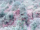 成都、乐山大佛、峨眉山双飞4日跟团游(真纯玩,不进购物店,不起早贪黑、品乐山跷脚牛肉风味餐,船游乐山大佛)