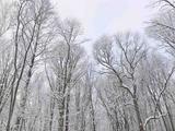 雾凇、长白山、镜泊湖、雪乡、哈尔滨双飞6日跟团游(东北贵宾超级礼遇季,全程优选高标酒店住宿、万科5S滑雪、不限时温泉泡汤、8大冰雪礼遇、雪季抢先GO,特卖)