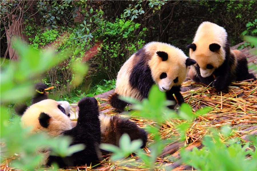 雅安2天1晚雅安碧峰峡萌趣东方动物主题酒店,游雅安区
