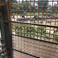 上海野生动物园门票 - 成人票(包含猛兽区大巴游览)+电子导览(智能导览伴你游)