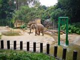 广州长隆2天1晚【三人双园自由行】住熊猫酒店+长隆野生动物园(两天多次入园)+长隆国际马戏