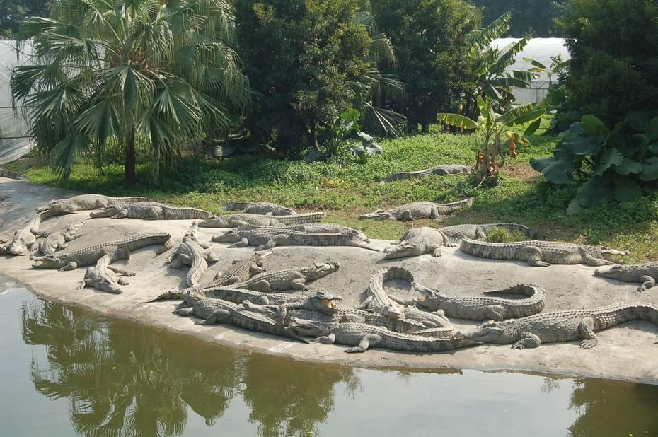 广州鳄鱼公园地址_广州鳄鱼公园大全广州东湖公园广州鳄鱼公园