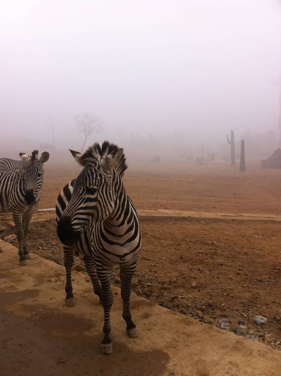 杭州野生动物世界门票点评